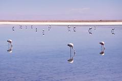 Chile X (kenjha) Tags: chile santiago lake del america mar do desert south salt salinas val atacama paraiso salar sul deserto vina lhama calama vicuna