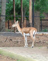 mysore zoo 8