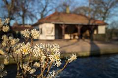 2014-03-11-17h23m07.IMG_0448 (A.J. Haverkamp) Tags: amsterdam zoo spring misc thenetherlands lente artis dierentuin voorjaar httpwwwartisnl canonefm22f2stmlens