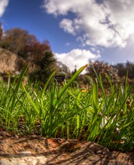 As Seen from Below- Colby Gardens (ognaf) Tags: blue sky holiday plant macro green up grass wales garden easter close sony sigma fisheye national trust pembrokeshire colby walled a77 10mm a77v
