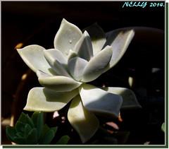 *Under the Sun...!* (MONKEY50) Tags: plant macro nature soe autofocus greenscene flickraward pentaxart photographyforrecreation pentaxflickraward top25naturesbeauty