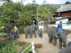 Paulinka - Thai Elephant Home