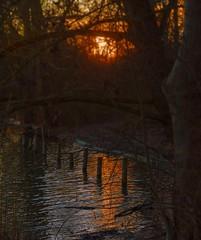 Shore mood (KF-Photo (no pro)) Tags: sonnenuntergang dmmerung ufer spiegelung reflektion baggersee pfhle kirchentellinsfurt uferbereich