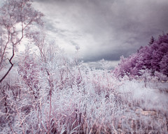 A summer turned winter (LukeOlsen) Tags: usa oregon portland ir infrared colorinfrared lukeolsen
