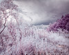 A summer turned winter (LukeOlsen) Tags: usa oregon portland ir infrared colorinfrared lukeolsen