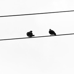 (Annafur) Tags: white black birds contrast wire minimal pdx simple