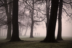 Standing tall....... (Digital Diary........) Tags: trees misty fog group foggy freezing trio sthelens bitter standingtall merseyside talltrees sherdleypark peopleinmist