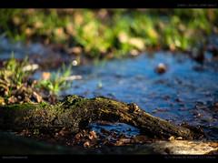Winter Evening (Phillip Reeve) Tags: lenstagger
