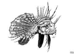 Fisch (Sascha Selli) Tags: fish art fauna illustration pencil hand drawing fisch drawn graphite traditionell graphit drachenfisch dragonfisch
