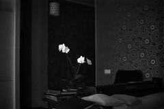 (redmetal35) Tags: film 35mm 150 ilfordhp5 rodinal 11min zuiko5014 olympusompc microtek1800f
