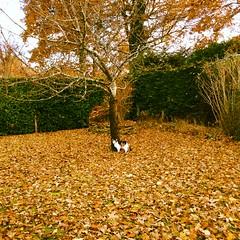 (Lucie Guinjard) Tags: orange nature colors automne iphone