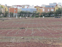 El Burrero (Risager) Tags: grancan elburrero