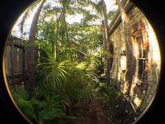 CamLink CRX4030 Semi-Fisheye Video Lens 0.45X (aushiker) Tags: plants green nature photography fisheye granite onecolour camlinkcrx4030
