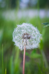 Leica X Vario, First Test (Gensu) Tags: leica flowers flower macro meadow wiese blumen x blume makro vario xvario leicaxvario