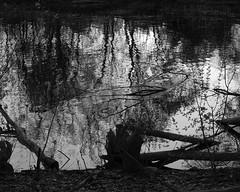 morning backwater (thomas.erskine) Tags: morning bw water reflections river spring ottawa may stumps backwater 2016 20160520imgp9819teecroplevdesatunsh