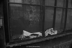 This photo is rubbish. (MAMF photography.) Tags: uk greatbritain england blackandwhite bw art monochrome blackwhite google nikon flickr noir noiretblanc unitedkingdom britain yorkshire negro north gb upnorth pretoebranco schwarz biancoenero westyorkshire onthestreet morley googleimages northernengland enblancoynegro greatphotographers ls27 mamf inbiancoenero schwarzundweis morleyleeds nikond7100 mamfphotography