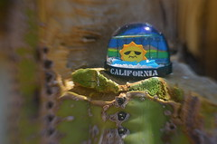 A Dome Home With A Cliff View (MPnormaleye) Tags: california cactus sun strange lensbaby 35mm globe desert letters utata saguaro paperweight tabletop utata:project=tw529