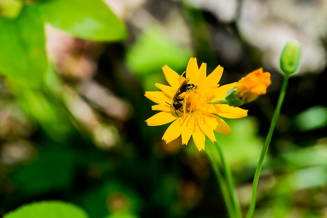 Hoosier National Forest - Martin Hollow Trail - May 13, 2016