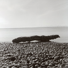 Ribble Estuary (Bowman238) Tags: blackandwhite film monochrome analog mediumformat coast outdoor lytham driftwood 400 hp5 medium analogue ilford yashica yashicamat