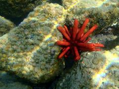 Kailua Pier Diving - X (Anders Magnusson) Tags: water hawaii snorkel dive diving olympus thebigisland eastcoast kailua kailuakona andersmagnusson