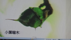 DSC07556 (yongheecs永和社大生態保育社) Tags: 林場