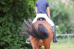IMG_3072 (dreiwn) Tags: horse pony horseshow pferde pferd equestrian horseback reiten horseriding showjumping dressage reitturnier dressur reitsport dressyr ilsfeld dressuur ridingclub junioren ridingarena pferdesport springreiten reitplatz reitverein dressurreiten dressurpferd dressurprfung jugentturnier