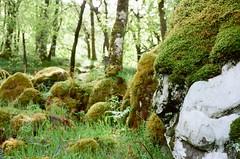Quartz (strzez wartosci) Tags: film analog forest scotland highlands minolta hiking rangefinder trail westhighlandway minoltahimatic
