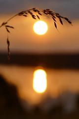 Mittsommernacht (Don Bello Photography) Tags: sommer 2016 midsummer mittsommernacht tollensesee kleinnemerow sonnenuntergang sonne sonnenlicht sonnenreflektion reflektionen abendlicht abendstimmung abendhimmel abendsonne abendstille abendleuchten korn spiegelung acdsee acdseeultimate9 panasonicphotographer panasonicfz1000 lumixphotographer lumixfz1000 reinhardbellmann norddeutschland northerngermany neubrandenburg mecklenburgvorpommern donbello donbellophotography himmel himmelsbilder 50favorites 1000views 100favorites 2000views europa europe 3000views fz1000
