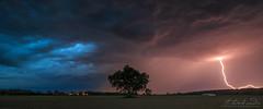 Tree in storm (Neferkheperure) Tags: storm rain night lightning thunder