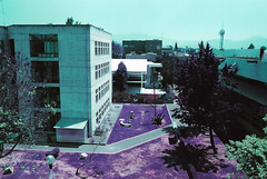 UAM-X 3/5 (The Daniel Garca) Tags: film lomo lomography purple phototgraphy lomochrome