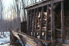 Wood (nroclaniffirg) Tags: spring maple fuji quebec superia sugar 400 fujifilm shack xtra