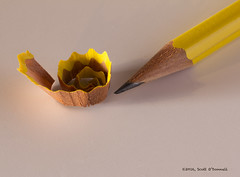 Making a Point (scottnj) Tags: wood macro yellow pencil point colorful sharp curled curl sharpen lead pointed pencilshavings pencillead pencilshaving 365project woodenpencil sharpenapencil cy365 scottodonnellphotography reddit365 redditphotoproject