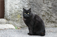 Happy Caturday ! (Simply Viola) Tags: pet cat blackcat feline felino gattonero