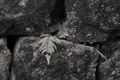 Vern (__stuart__) Tags: blackandwhite white black monochrome japan stone wall canon eos blackwhite 7d 1740mm canonef1740mmf4lusm 1740 honshu canonef1740mmf40l canoneos7d canon7d