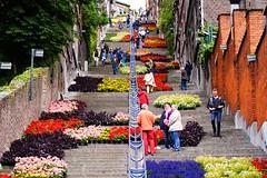 Bueren en fleurs (Lige 2016) (LiveFromLiege) Tags: belgium belgique liege luik lige wallonie bueren lieja lttich liegi montagnedebueren buerenenfleurs