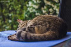 Relax in the garden (PurpleTita) Tags: cat gatto garden giardino pomeriggio relax riposo sonno