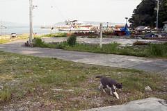 20160507-16 (GenJapan1986) Tags: 2016 fujifilmfujicolorsuperiaxtra400 nikonnewfm2 ネコ フィルム 動物 太平洋 宮城県 海 田代島 石巻市 離島 film japan 日本 island tashirojima miyagi cat animal sea pacificocean