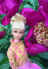 Flora (Foxy Belle) Tags: francie doll barbie plant flower peony magenta yellow floral top shirt cotton growing hair tlc blonde mod 1960s vintage