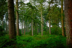 * (vieubab) Tags: arbres fort nature bois sentier chemin extrieur troncs verdure