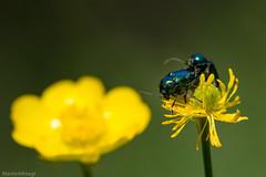 IMG_0714-244 (Martin1104) Tags: fotografie natuur bergen landschap vlinders yagodina snp bulgarije natuurfotografie natuurreis