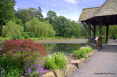 Bodnant on Referendum Day 23.6.16 (paul_p!) Tags: insect nationaltrust damselfly lilypond northwales bodnantgardens