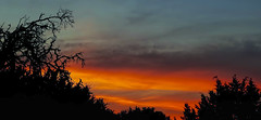 Twilight Canvas (brucecarlson66) Tags: blue light sunset sky orange sun color reflection nature beauty silhouette yellow set austin painting landscape twilight oak paint branch texas live country hill gray canvas springs twig tricolor layer limb hue dripping permeate saturate