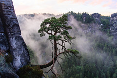 fog tree and rock (.pd33) Tags: germany niederrathen rathen saxony fog foggy geo:lat=5096194180 geo:lon=1407469160 mist nature rock stone tree sachsen ngc bastei