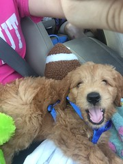 Sophia and Chewy's Oscar has a great smile on his way to his new home!