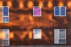 Day #3051 (cazphoto.co.uk) Tags: windows reflection building wall architecture lumix golden evening bricks panasonic housing hertfordshire project366 080516 dmcgh3 panasonic1235mmf28lumixgxvarioasphpowerois beyond2922