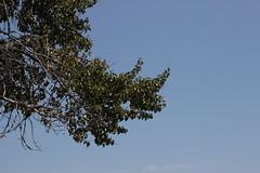 IMG_1870 (GabrielBlaisD) Tags: new summer ontario canada liskeard