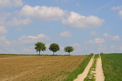 Three brothers (Xtraphoto) Tags: trees tree field way landscape three bume baum feldweg weg drei thetreetales