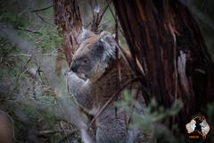 20160412-2ADU-012 Kangaroo Island