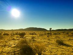 Sun Over the Desert (Sam Howzit) Tags: california sun nature outdoors nationalpark desert joshuatree joshuatreenationalpark