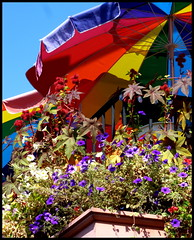 umbrellas (D G H) Tags: seattle flowers downtown streetphotography pikeplacemarket umbrellas pikeplacepublicmarket daveheston